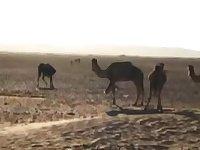 arabian desert camps pt2